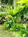 CHRISTOPHER ONG - My Footsteps. My Dreams. Beautiful tropical garden design