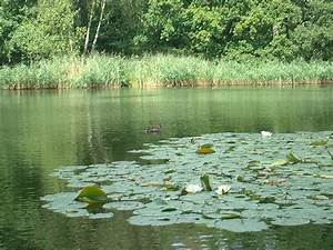 Remix Of  U0026quot Pond Ecosystem U0026quot