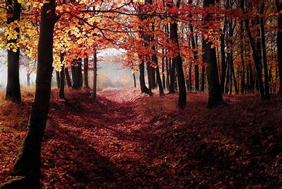 Fall Autumn Forest Trees 5k Woods Wallpapers