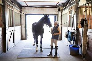 25 best ideas about pony horse on pinterest pony pony With cost of running a horse boarding stable