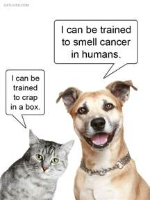Cat vs Dog Funny Quotes