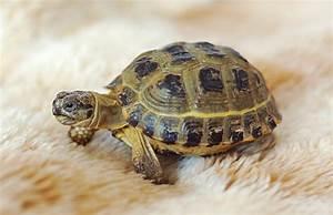 Russian tortoise by Lai-Wei on DeviantArt