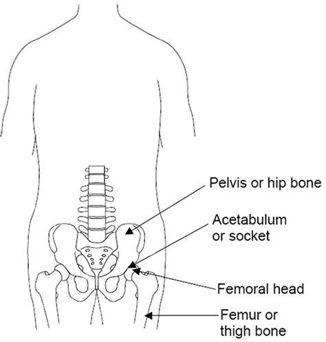 diagram of hip