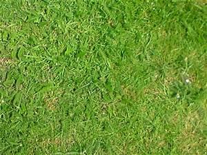 Unkraut Im Rasen Bestimmen : unkraut im rasen was ist das schafgarbe und storchschnabel pflanzenbestimmung pflanzensuche ~ Frokenaadalensverden.com Haus und Dekorationen