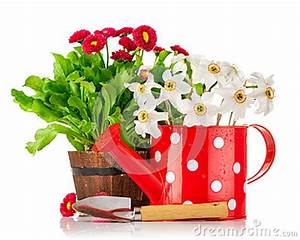 Grünpflanzen Im Topf : fr hlingsblumen im topf und in der gie kanne stockfoto ~ Michelbontemps.com Haus und Dekorationen