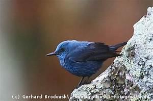 Vogel Mit Roter Brust : alle vogelarten bestimmen heimische vogelarten erkennen bilder mit namen ~ Eleganceandgraceweddings.com Haus und Dekorationen