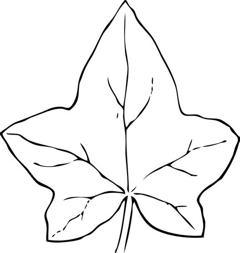 leaf coloring pages  coloring pages  print