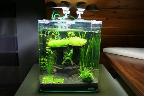 fische kleines aquarium nano aquarium zu klein fuer fische