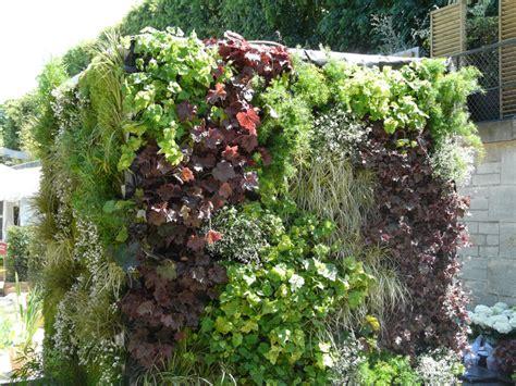 plantes pour mur vegetal exterieur atlub