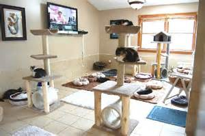 cat room 1000 images about cat trees on cat litter