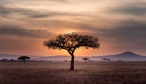 Luxury African Safari Travel Agents   Custom African ...