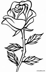Coloring Rose Printable Cool2bkids sketch template