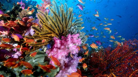 sea life hd wallpapers background images wallpaper