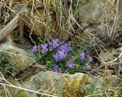 Pflanzen Im März by Bildarchiv Boden