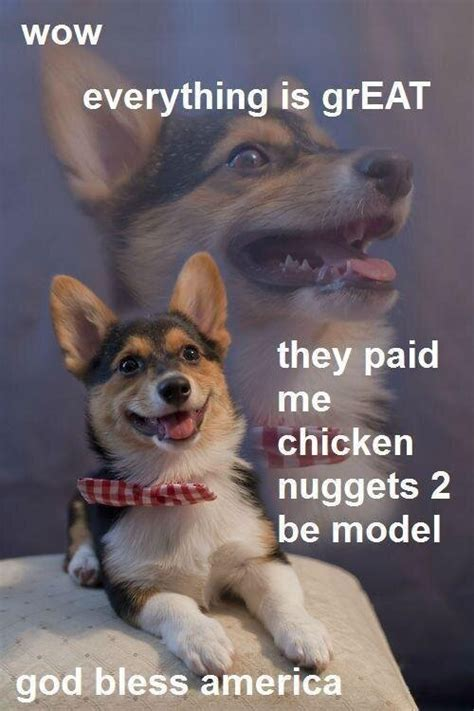 Wow Dog Meme - clif reeder on twitter quot wow everything is great they paid me chicken nuggets 2 be model god