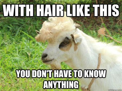 extremely entertaining goat memes sayingimagescom