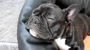 Hundebekleidung Französische Bulldogge : franz sische bulldogge tyson schnarcht french bulldog snoring youtube ~ Frokenaadalensverden.com Haus und Dekorationen