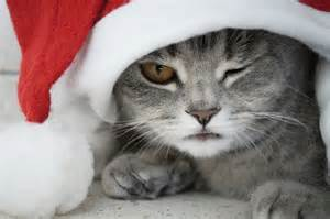 cat santa hat furball fables are you or with cats