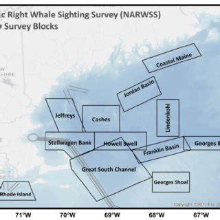 Atlantic Right Whale Diagram by D Atlantic Right Whale Sighting Survey Narwss