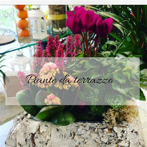 piante terrazzo piante da terrazzo