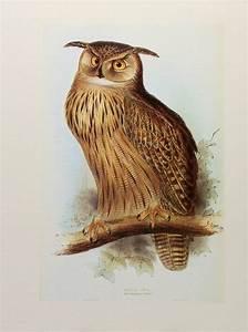 Pics For > Vintage Owl Illustration