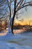 beautiful winter sunset  trees   snow stock