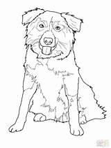 Shepherd Australian Drawing Coloring Pages Getdrawings sketch template