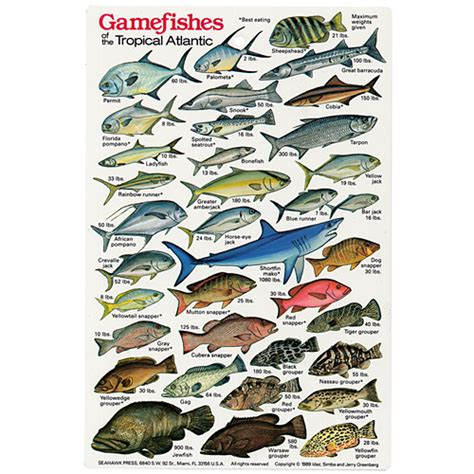 game fish tropical atlantic fish id card