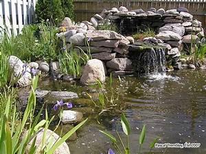 jardin aquatique bassin ou etang et jardin d39eau guide With idee pour amenager son jardin 4 construire bassin exterieur etang ou jardin deau plans