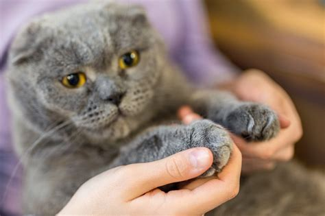 cat declawing cats human paw declawed declaw why bite ear cropping ban does state bill york reason ready hand litter