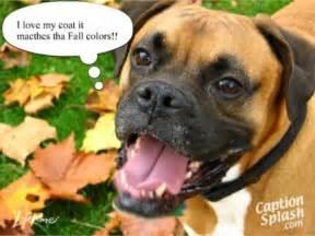 Funny Boxer Dog Sayings
