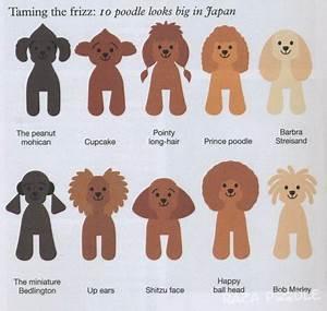 Cortes de pelo para poodles estilo japonés Raza Poodle