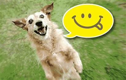 Dog Happy Ecards Quotes Gifs Thoughts Friendship