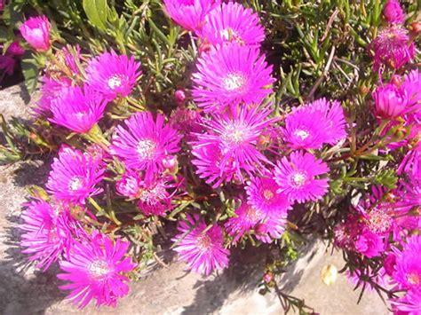 meditteranean plants a drought in yr garden my climate change garden