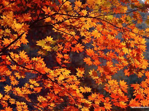 Orange Fall Wallpaper by Fall Wallpapers Hd Desktop Wallpapers 4k Hd