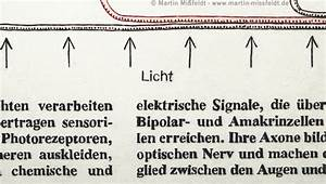 Light  Schematic Diagram