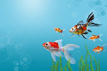 aquarium im webstore hier auf rechnung shoppen