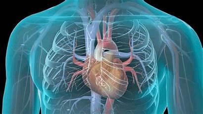 Heart Cardiology Cardiac Cardiovascular Failure Cardiologist Interventional
