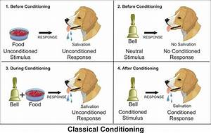 Classical Conditioning - Pavlov