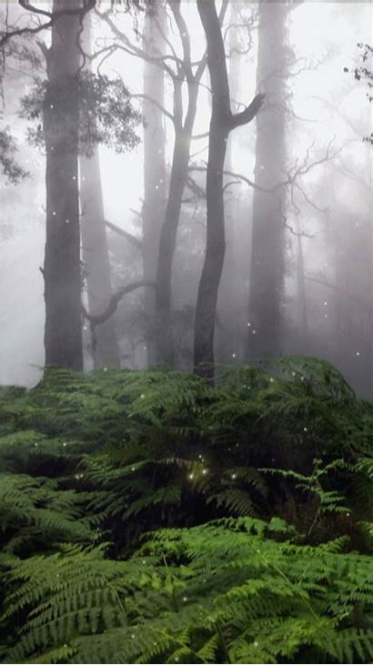 Rainforest Forest Misty Tropical Woodenboxlwp Trees Phone