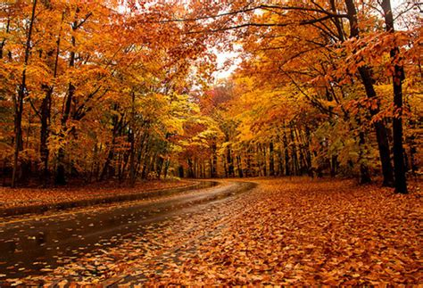 best fall colors the top 10 places to see fall foliage in toronto