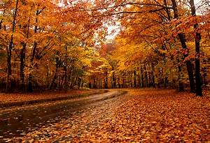 The top 10 places to see fall foliage in Toronto  Fall