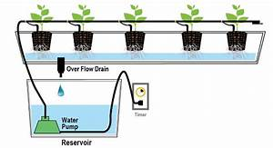 Types Of Hydroponics Systems  A Complete Guide