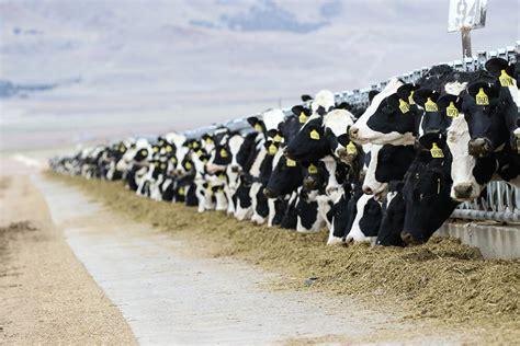 conheca  exigencias minerais de bovinos rehagro