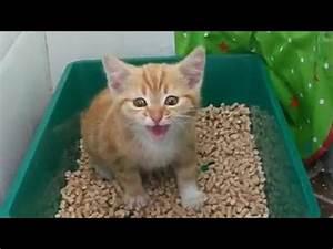 Cute Kitten sing funny cats sing GATTINI CHE CANTAN Doovi