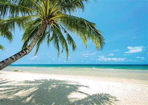 toile pour chambre tableau géant plage paradis palmier sur la plage déserte