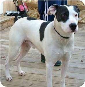 Biggie Smalls   Adopted Dog   Virginia Beach, VA ...