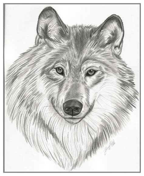 drawings animals  behance