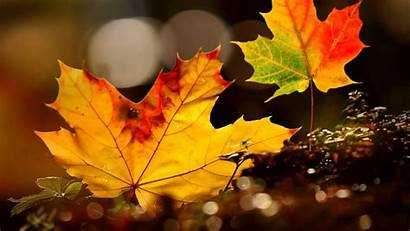 Autumn Background Leaves Wallpapers Leaf Backgrounds 1920