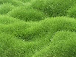 21+ Green Textured Backgrounds, Wallpapers, Pictures ...